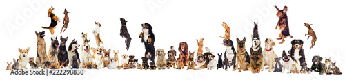 Poster Chien set, group of pets