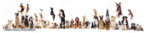 set, group of pets © Happy monkey