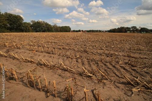 Noternte im Rekordsommer 2018 in Niedersachsen / vorgezogene Maisernte nach wochenlanger Trockenheit