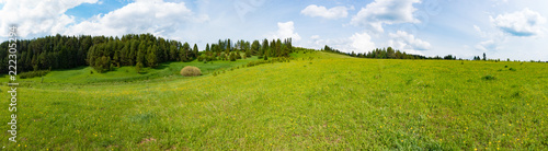 Tuinposter Blauwe hemel Panorama of a meadow with green grass and trees