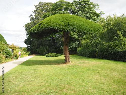 Foto op Canvas Pistache Looks like a large Mushroom Tree