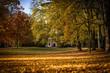 Lichtung mit Bäumen im Herbst bei Sonnenschein und Gebäude im Hintergrund