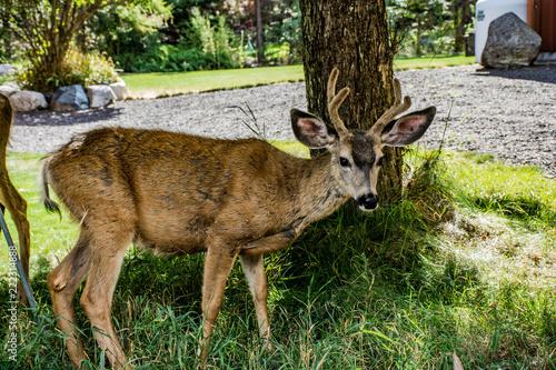 Fotografie, Obraz  Inquisitive young buck