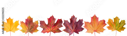 Сollection beautiful colorful autumn leaves isolated on white background