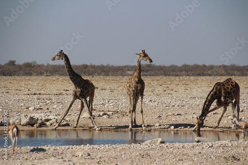 Wasserloch in der Steppe von Namibia