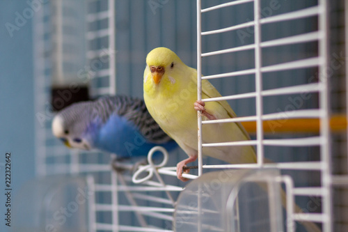 Two parrot sits at the exit of the cage. Birds