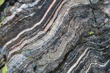 Quartz Veins In Metamorphic Rock