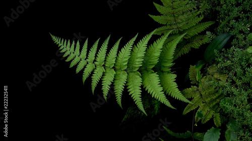 Staande foto Kameleon Tropical plant green leaves fern in garden on dark background