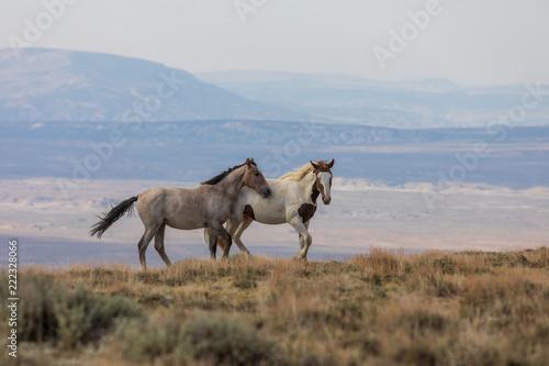Wild horses in the Colorado High Desert