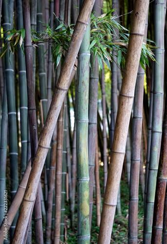 In de dag Bamboo Museo Orto Botanico, Università di Roma La Sapienza