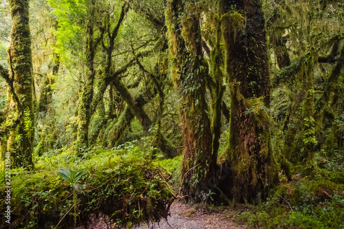 Detail of the enchanted forest in carretera austral, Bosque encantado Chile