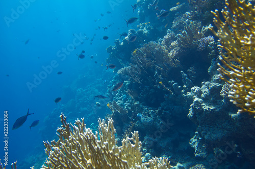 Fotobehang Koraalriffen coral colony on a reef