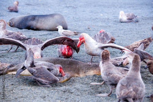 Fotografie, Obraz  Portrait shots of different species of birds in Antarctica