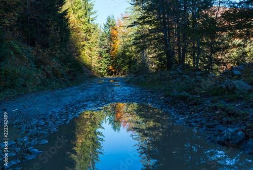 Autumn road in Carpathians (Ukraine).