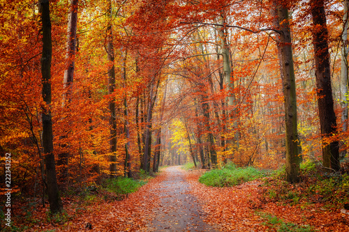 fototapeta na drzwi i meble Pathway in the bright autumn forest