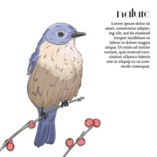 Bluebird On A Tree With Red Be...