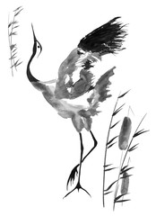 Fototapeta Japoński Japanese crane bird drawing. Watercolor and ink illustration in style sumi-e, u-sin, go-hua Oriental traditional painting. Isolated .