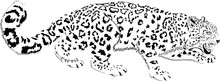 Black And White Vector Mountains Snow Leopard