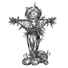 Rustic Fun Scarecrow And Ripe Pumpkins. Sketch. Engraving Style. Vector Illustration.