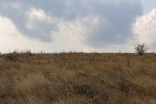 Tall-grass Prairie Field