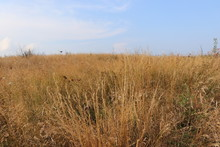 Tall-grass Prairie Field