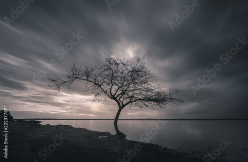 Fototapety, obrazy: tree in fog