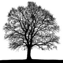 Black And White Autumn Tree Silhouette.