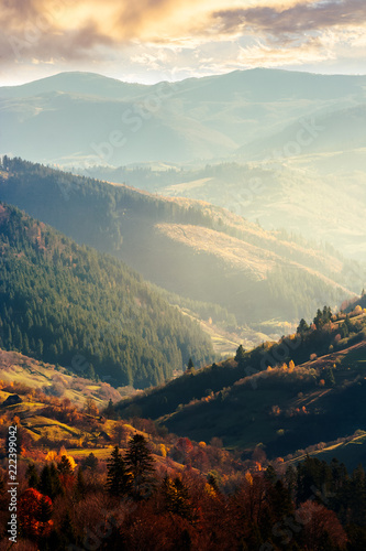 Aluminium Prints Autumn beautiful afternoon in mountains. lovely autumn weather. nearest forest in colorful foliage. distant mountain in haze. vertical