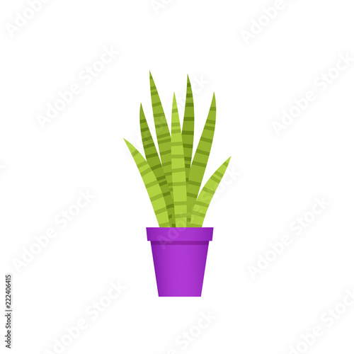 Sansevieria Potted Plant In Pot Vector Snake Plant Mother In Law Tongue Indoor Flower In Flat Design Isolated On White Background Animated Houseplant Cartoon Colorful Illustration Buy This Stock Vector And,When Are Strawberries In Season In Australia