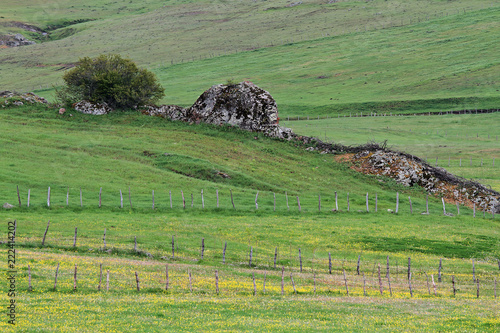 In de dag Pistache A row of stones in green Turkish countryside