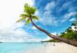 long palm tree and beach on Saona Island