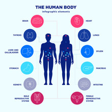 Human Body Infographic Element...