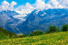 Mountain Flower Meadow In Alps, Switzerland