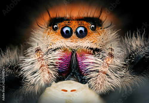 Canvas Prints Hand drawn Sketch of animals spider in extreme macro
