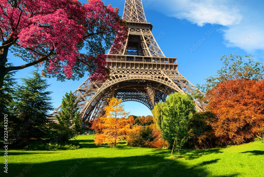 Fototapeta Trees in park of Paris in autumn