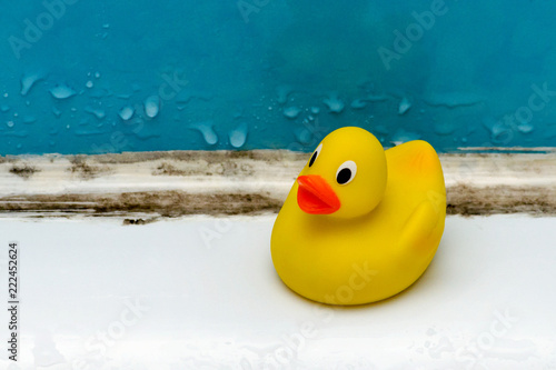 Fotografie, Obraz mold in bath, a duck toy in a dirty bathroom