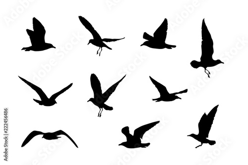 Fotomural Silhouetten von 10 Möwen, Vektorgrafik, Vogel Icons
