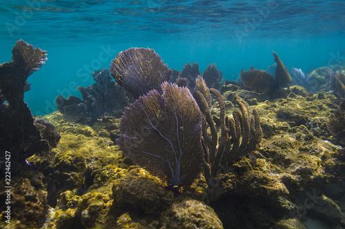 Spoed Foto op Canvas Onder water Roatan coral reef