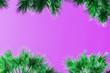 Leinwanddruck Bild - Palm trees against violet background.