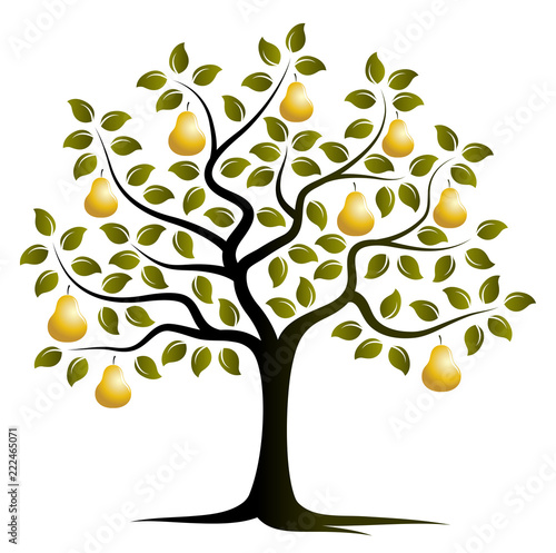 Fototapeta golden pear tree