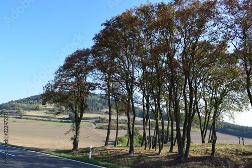 Foto op Aluminium Grijze traf. Herbstbäume