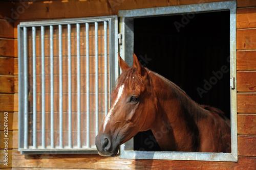 Fotografía  braunes pferd an einem stallfenster