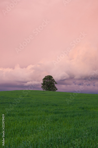 Lonely tree on the hill after rain