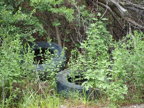 Fotografie, Obraz  Nature Goes To Work To Reclaim Old Tires Tossed Along Side Roadway