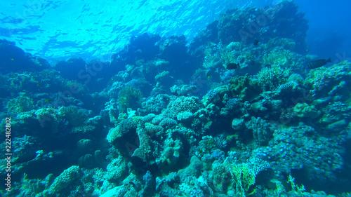 Staande foto Koraalriffen the coral reef