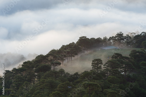 Deurstickers Grijs Backgroud with fog cover pine forest and magic of the light, sunrays, artwork done elaborately, landscape and nature, Picture use for printing, advertising, travel magazines and more.