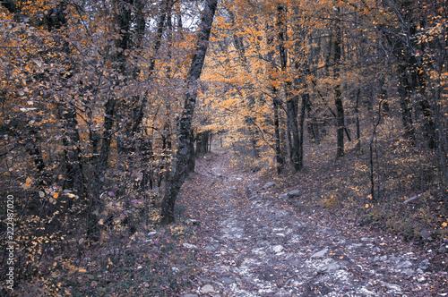Keuken foto achterwand Schip Дорога в осеннем лесу.Осенний лиственный лес на Кавказе, Краснодарский край, Россия