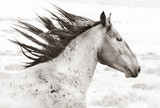 Wild Horses of Utah - 222498889