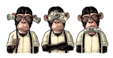 Three Wise Monkeys. Not See, N...