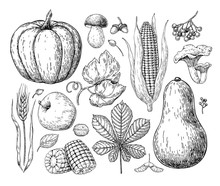 Harvest Products. Hand Drawn V...